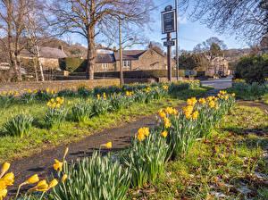 Картинки Великобритания Здания Весенние Нарциссы Улица Baslow Derbyshire город