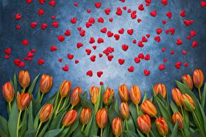 Фотография День святого Валентина Тюльпаны Сердечко Цветы