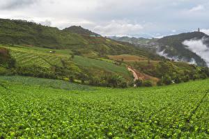 Фотографии Вьетнам Поля Холмы Mu Cang Chai Природа