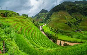 Фотографии Вьетнам Гора Поля Реки Траве Природа