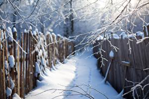 Обои для рабочего стола Зима На ветке Снегу Забор Природа