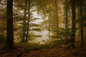 Картинки Осенние Леса Деревья Листва