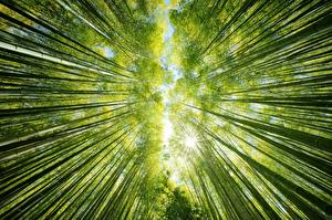 Фотография Бамбук Вид снизу Природа