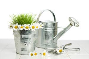 Фотографии Ромашки Ведро Траве цветок