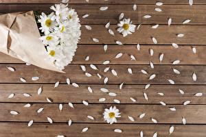 Картинки Ромашка Доски Лепестков Цветы