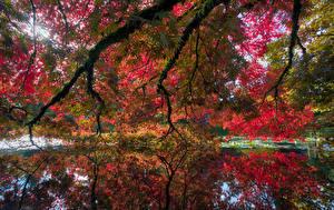 Обои Канада Сады Пруд Осенние Ванкувер Ветки VanDusen Botanical Garden Природа