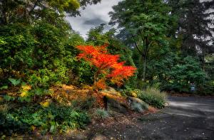 Картинка Канада Парки Ванкувер Деревья Кусты VanDusen Botanical Garden Природа