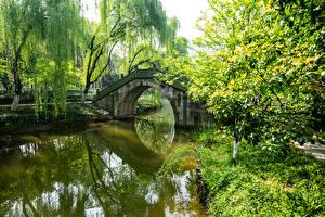 Картинки Китай Парки Пруд Мосты Дерево Природа