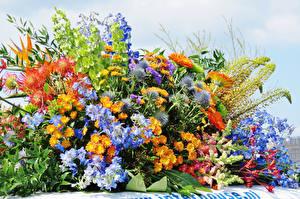 Фото Хризантемы Васильки Львиный зев Цветы