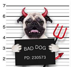 Фотографии Собаки Оригинальные Демон Бульдог Рога Плачет Смешные Bad Dog Животные