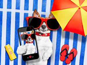 Обои Собака Джек-рассел-терьер Смартфон Очках Сланцы Селфи животное