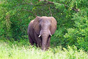 Фотографии Слоны