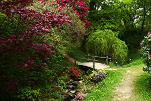 Картинка Англия Сады Мосты Ручей Кусты Ветвь Ramster Gardens Surrey Природа