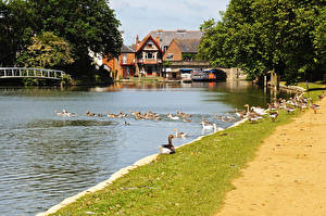 Картинка Англия Здания Речка Утки Пирсы Oxford Oxfordshire Города