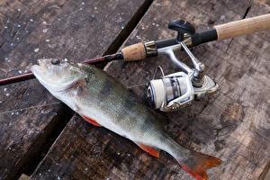 Картинки Ловля рыбы Удочка Рыба Доски European perch спортивный