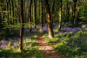Фото Леса Весенние Деревьев Ствол дерева Тропинка Природа