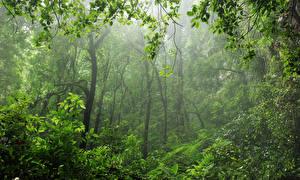 Картинки Леса Деревья Туман Ветвь