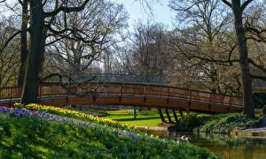 Фотография Германия Весна Парк Мосты Река Деревья Karlsruhe Природа