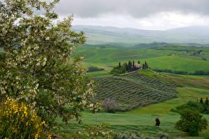 Картинка Италия Тоскана Пейзаж Поля Цветущие деревья Холмы Ветки Природа