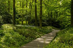 Фото Нидерланды Парки Дерева Трава Keukenhof Gardens Природа