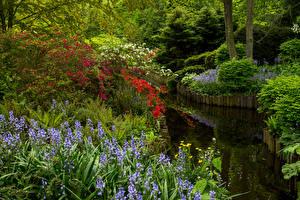 Фото Нидерланды Парки Пруд Колокольчики - Цветы Кусты Keukenhof Gardens Природа