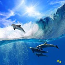 Обои Океан Дельфины Волны Море Прыжок Животные картинки