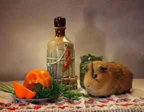 Обои Перец Морские свинки Бутылка Животные