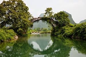 Фото Реки Мост Дерево Арки Природа