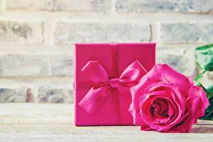 Фотография Розы Розовый Подарки Бантик цветок