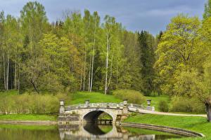 Фотографии Россия Санкт-Петербург Парки Реки Мост Деревья Pavlovsk Природа