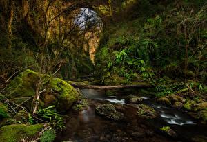 Фотография Испания Речка Камень Каньон Мох El Sallent Catalonia Природа