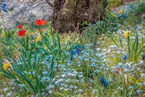 Картинка Весенние Тюльпаны HDRI