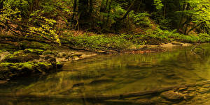 Фотография Швейцария Лес Камень Ручей Мха Orbe Природа