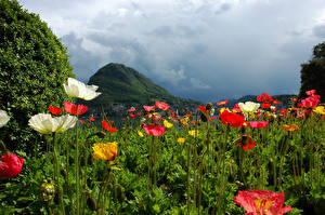 Обои Швейцария Горы Поля Маки Lugano Природа картинки