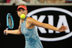Фото Теннис Мария Шарапова Мячик Рука Australia Open 2019 Знаменитости Девушки