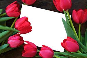 Фото Тюльпаны Крупным планом Шаблон поздравительной открытки Красные Лист бумаги цветок