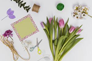 Фотография Тюльпаны Серый фон Шаблон поздравительной открытки Розовый Листва Цветы
