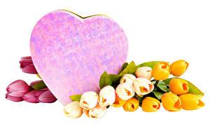 Фото Тюльпаны День святого Валентина Белый фон Сердце Разноцветные цветок