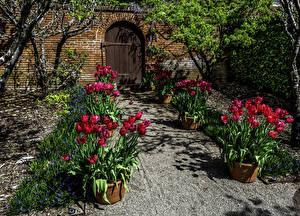 Фотографии США Сады Весенние Тюльпаны Калифорния Двери Filoli Gardens Природа