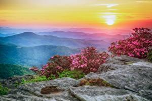 Фотографии США Пейзаж Рассветы и закаты Рододендрон Холмов Кустов Roan Mountain Rhododendron Gardens Природа
