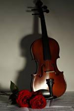 Фотографии Скрипки Роза Бордовый цветок Музыка