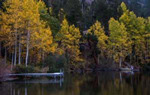 Картинка Осень Лес Озеро Причалы Природа