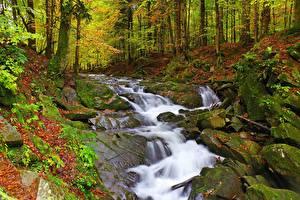 Фото Осенние Камень Леса Ручеек Мха Природа