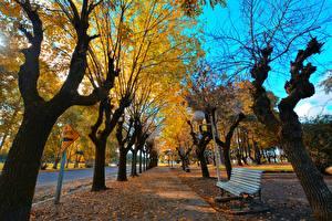 Фотографии Осенние Дерево Скамейка Лист Уличные фонари Аллеи Города