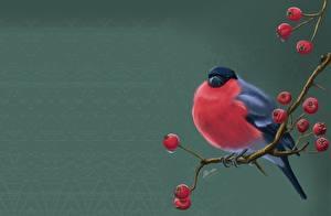 Фотография Птица Снегирь Рябина Рисованные На ветке Svetlana Antonova Животные