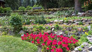 Фотография Канада Парк Камни Бегония Банф Cascade Gardens Природа
