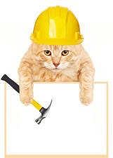 Фото Кошки Шаблон поздравительной открытки Белый фон Шлем Лапы Забавные Животные