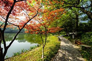 Картинки Китай Киото Парки Озеро Дерево Природа