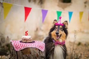 Картинка Собаки День рождения Колли Галстук-бабочка Счастливые Животные