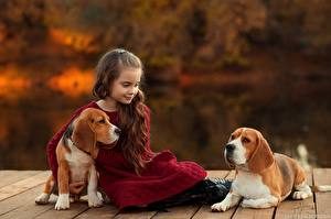 Обои Собака Девочка Сидящие Бигль Шатенка Ekaterina Borisova ребёнок Животные
